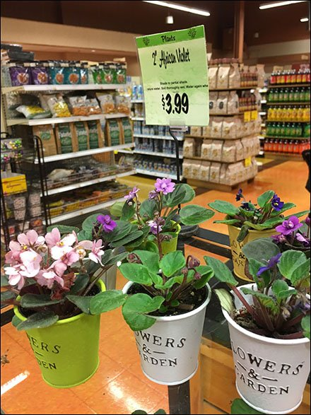 African Violet Floral Pail Merchandising
