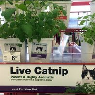 Live Catnip Merchandising and Pet Greens