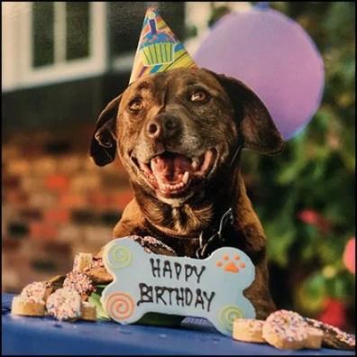 Happy Pet Birthday Props at Petco