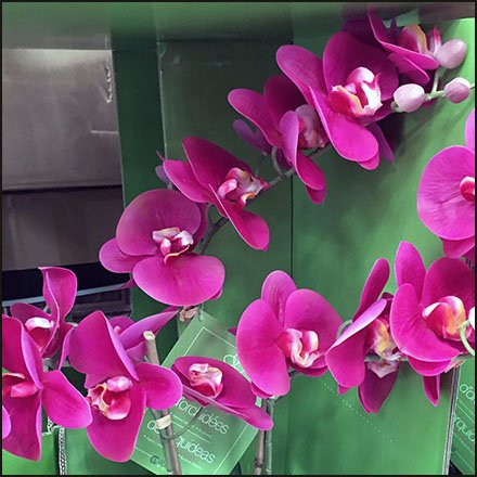Delicate Orchid Shipping Pallet Sales Feature