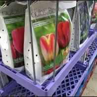 Plastic and Wireform Tulip Merchandiser