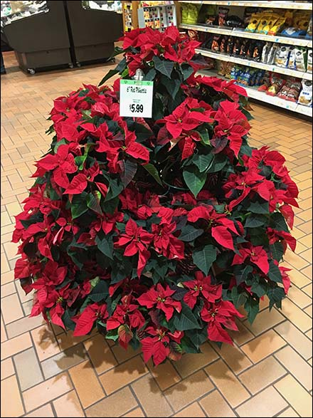 Poinsettia Ring Hook Tree as Display Rack