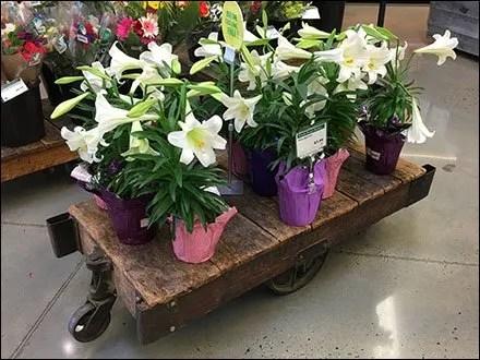 Vintage Flower Cart At Whole Foods