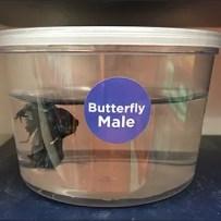 Grab-N-Go Betta Buddies Fish Merchandising