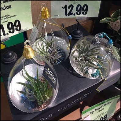 Air Plant Three-fer Merchandising by Live Trends