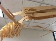 Layup Pterodactyl Model At Plywood Showroom