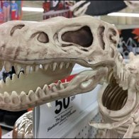 Tyrannosaurus Twins Celebrate Halloween Display