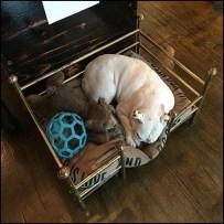 Plush Display Pet Bed Merchandising