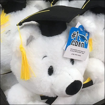 Graduating Teddy Bear Class Plush Display