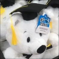 Graduating Teddy Bear Class Plush Display