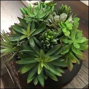 Nordstrom Table-Top Succulents Visual Merchandising