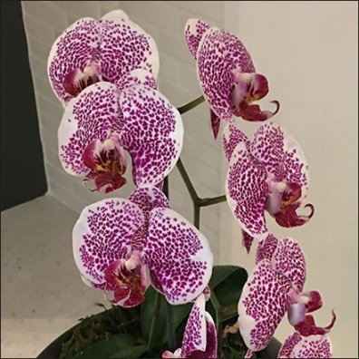 Sub-Zero Showroom Stovetop Orchid Prop Feature