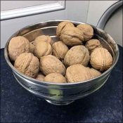 Unshelled Walnuts Showroom Kitchen Propping