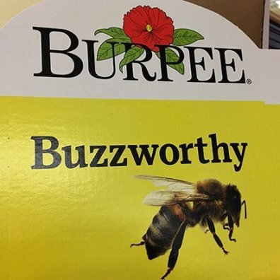 Buzzworthy Burpee Seed Corrugated Display