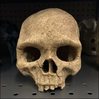 Skull Selection Shelf-Edge Merchandising