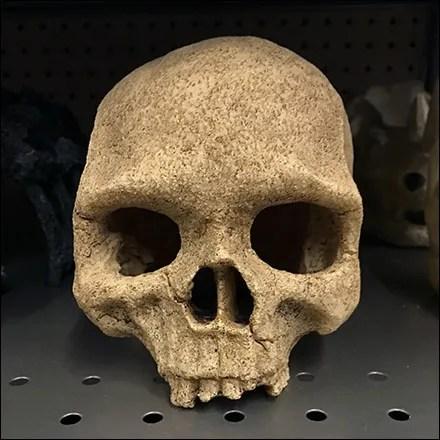 Skull Selection Shelf-Edge Merchandising