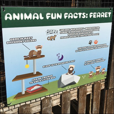Ferret Fun Facts Infographic Sign