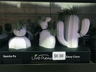 Live-Trends Easy Care Plant Assortments