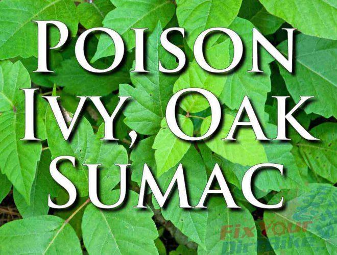 External First Aid Training Poison Ivy Oak Sumac