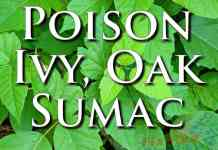 External First Aid Training Poison Ivy Oak Sumac