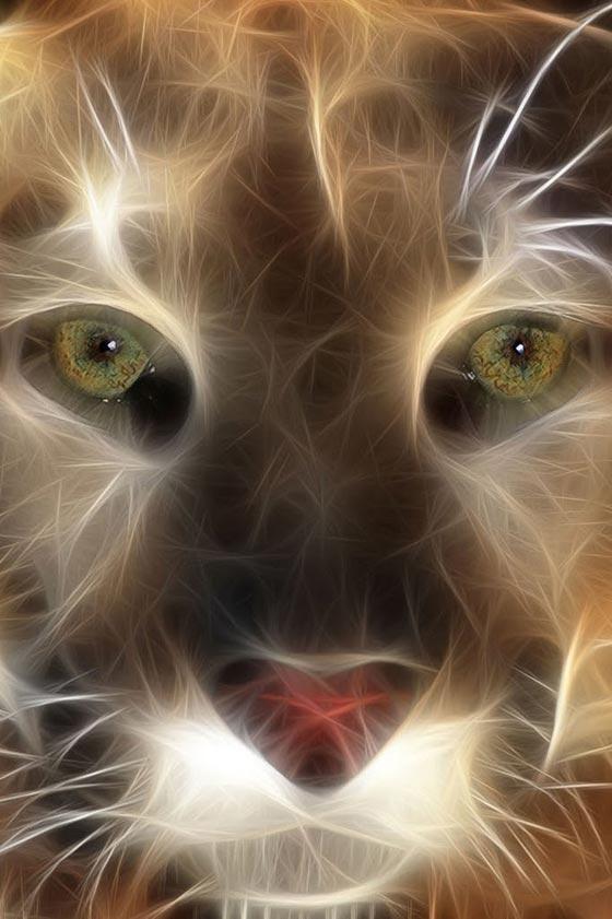 Retina wallpaper-kitty