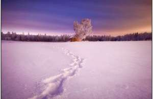 winter photography (5)