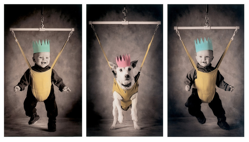 Most Adorable Dog Costumes For Christmas Cards