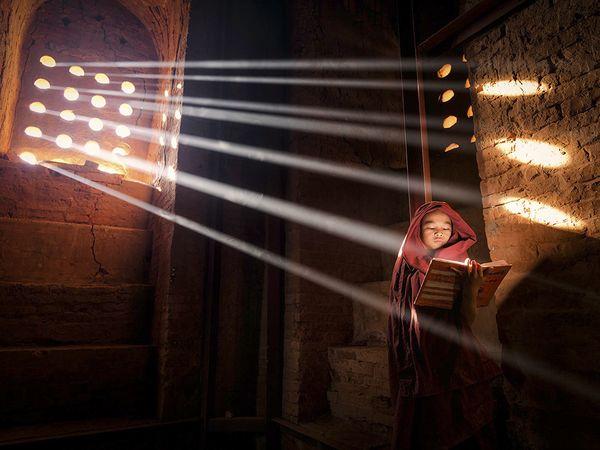 Burmese Rays