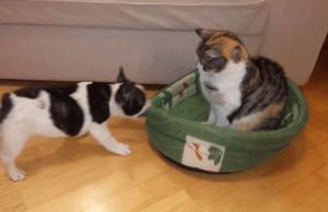 Puppy Wants His Bed Back, Cat Couldn't Care Less