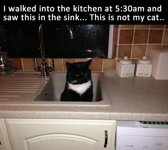 funny-cat-sink-kitchen-1