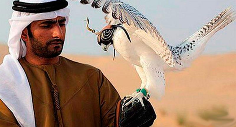 Dubai Wealth (30)