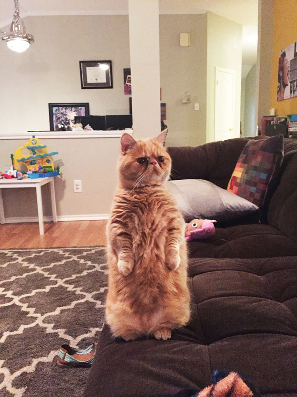George The Cat Prefers To Stand On Two Legs