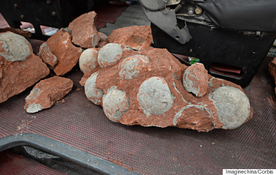 Dozens Of Dinosaur Eggs Discovered In China
