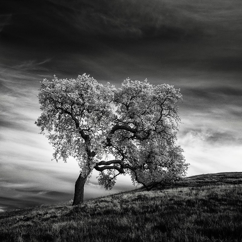 The Lonely Trees of California in Infrared