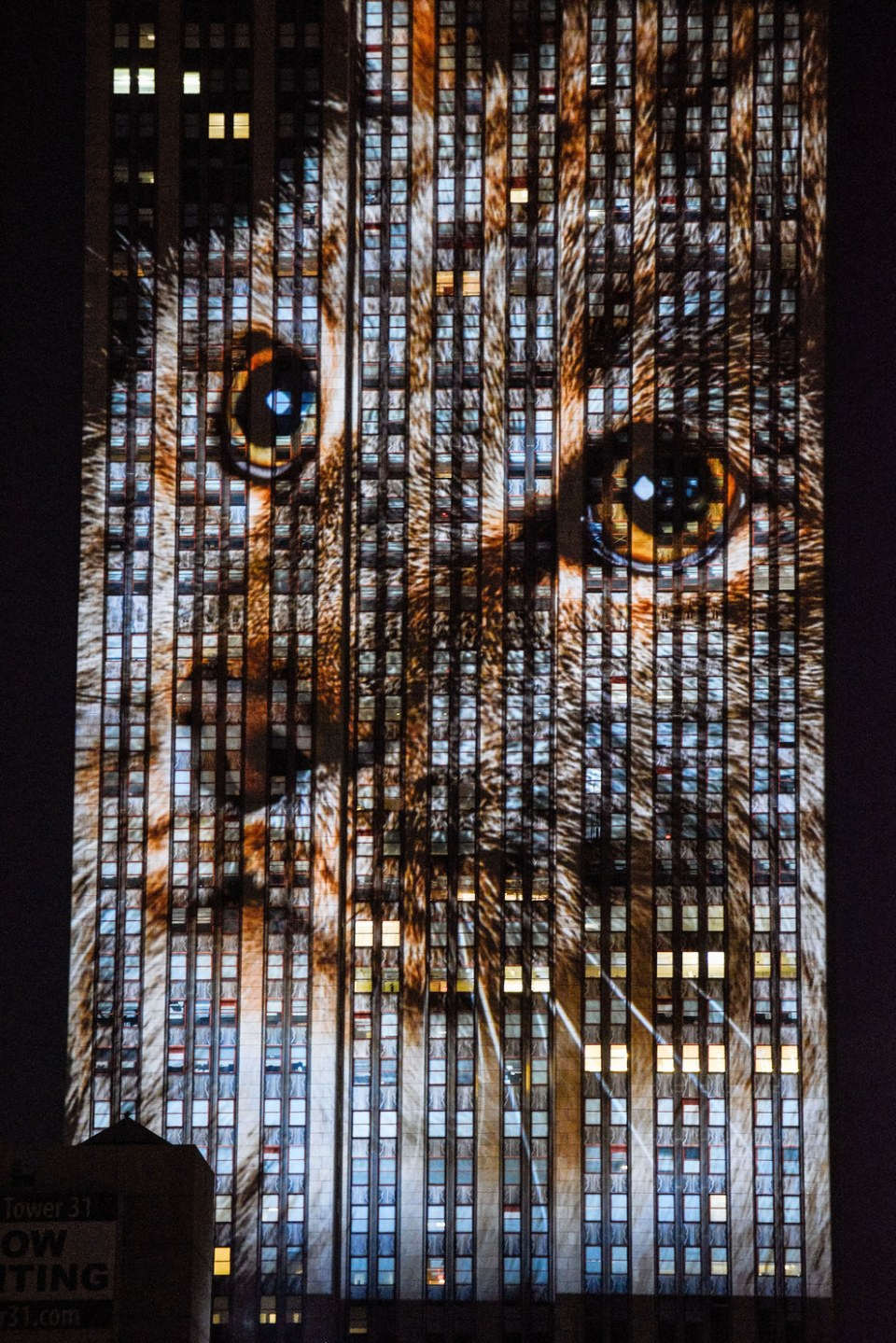 Endangered Animals Projected On The Empire State Building