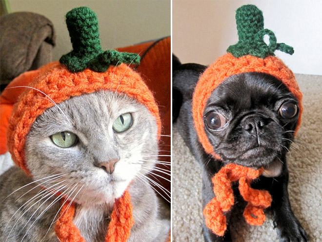 Animals Wearing Adorable Crochet Hats