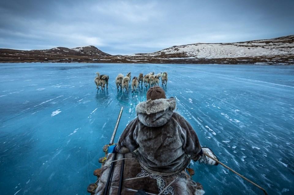 Dog sledding in Greenland