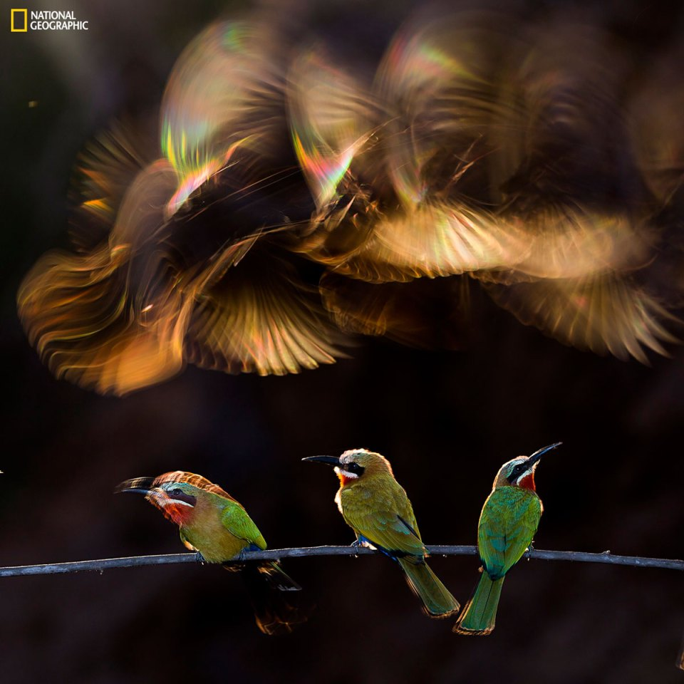 2015 National Geographic Photo Contest