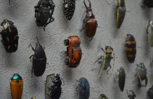 Insect Exhibit in Cleveland Museum