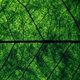 1721010-R3L8T8D-1000-macro_textures_list_veins_greens_nature_2560x1440_hd-wallpaper-319256