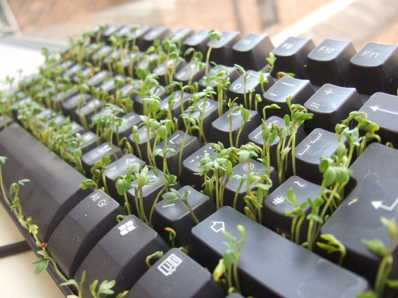 Cress_keyboard-3_sprouting_other_side