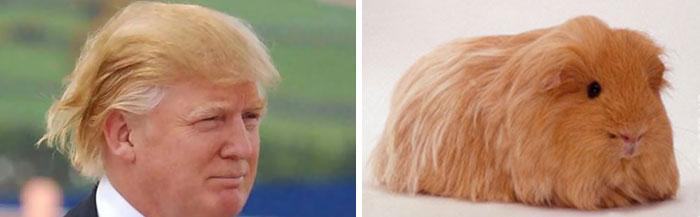 things looks like donald trump (7)