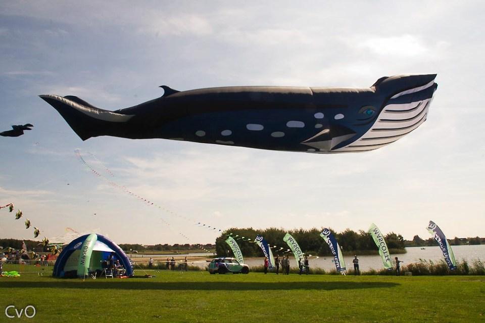 90 ft WhaleKite