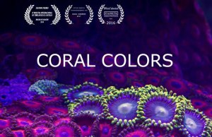 Incredible Coral Timelapse