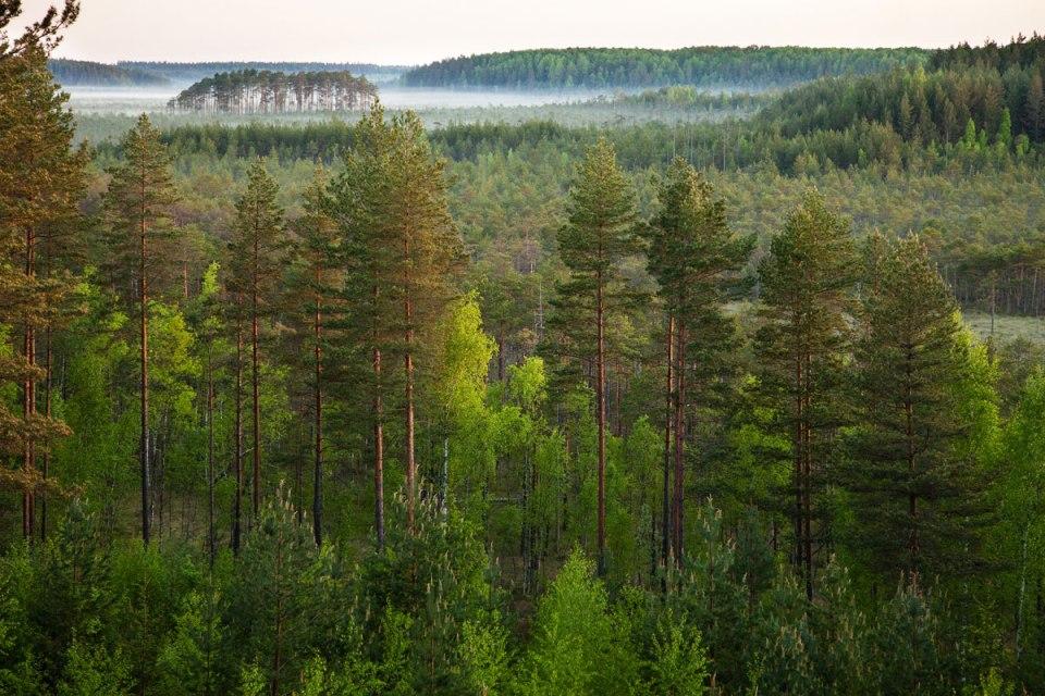 Meenikunno Nature Park, Estonia