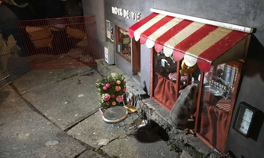Tiny Shops For Mice Now Open In Sweden