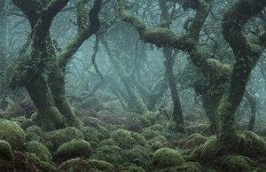 Enchanted Forest of Dartmoor,England