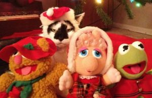 Animals That Hate Christmas