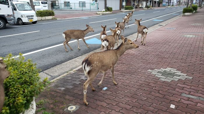 Animals Are Roaming in Cities