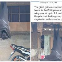 People Are Terrified Over This Huge 'Human-Sized' Bat